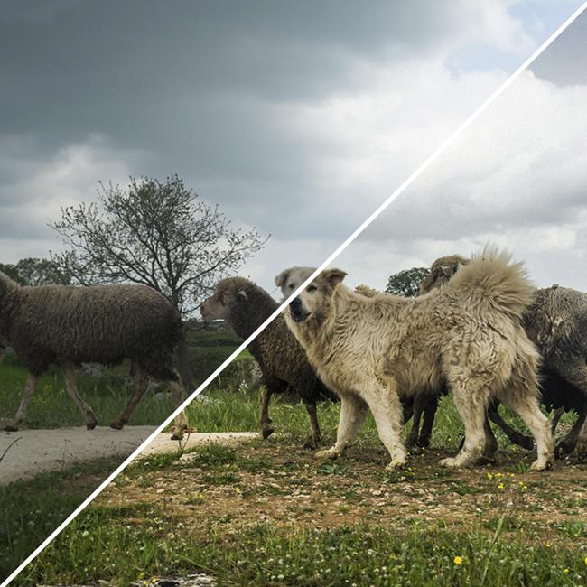 Corso base di Postproduzione fotografica a Bari - Puglia (anteprima 02)